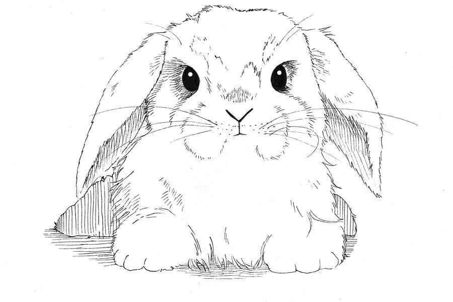 Раскраска Милый взгляд Скачать Животные, зайчик.  Распечатать ,кролик,