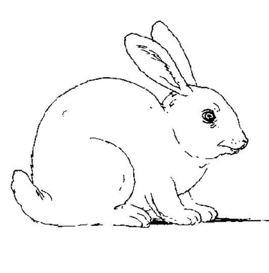 Раскраска Трусишка зайка Скачать Животные, зайчик.  Распечатать ,кролик,
