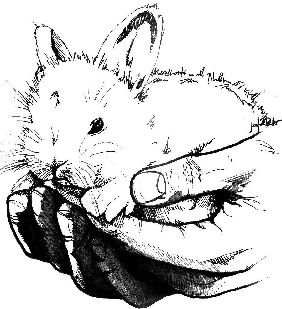 Раскраска Зайчишка в руках. Скачать Животные, зайчик.  Распечатать ,кролик,