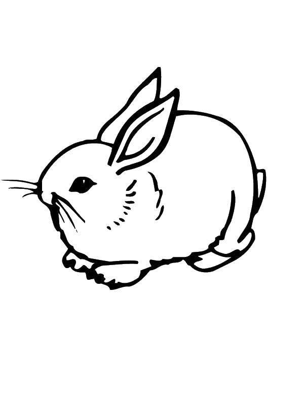 Раскраска Зайка такой маленький Скачать Животные, зайчик.  Распечатать ,кролик,