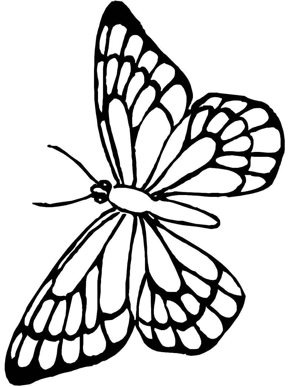Раскраска бабочка Скачать ,Животные, мышка,.  Распечатать