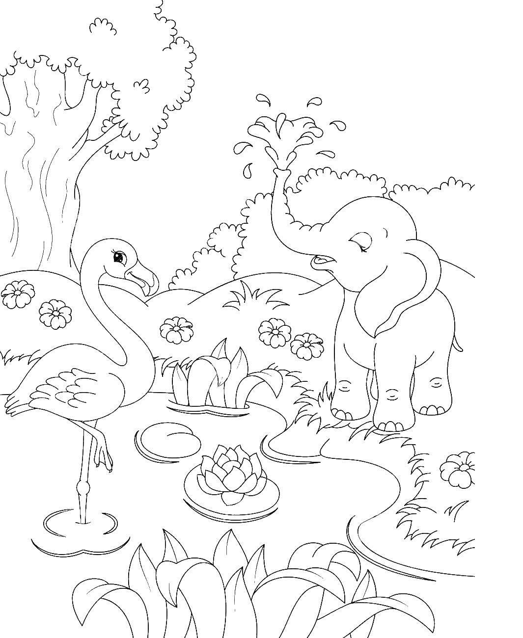 Раскраска Фламинго и слон на болоте с кувшинками Скачать фламинго, слон, болото, кувшинки.  Распечатать ,Природа,
