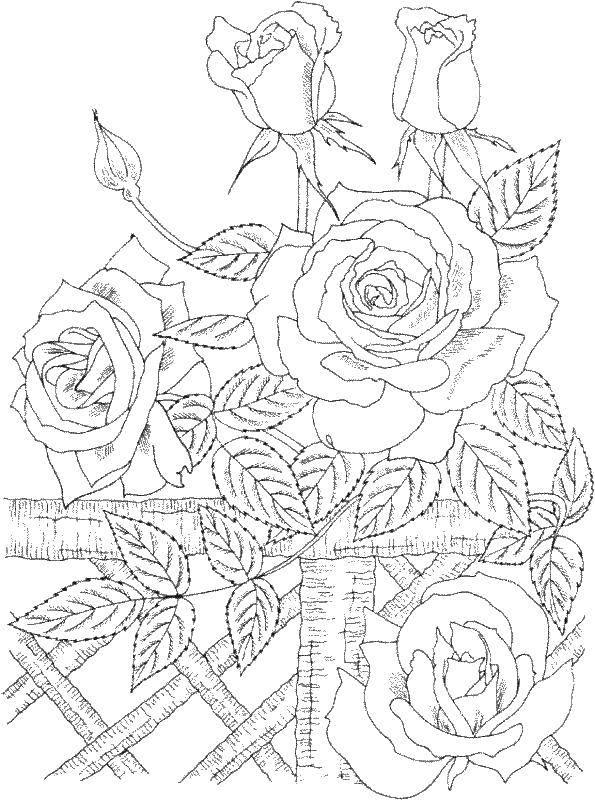 Раскраска цветы Скачать Белоснежка, Жасмин, Золушка, Ариэль.  Распечатать ,Принцессы,