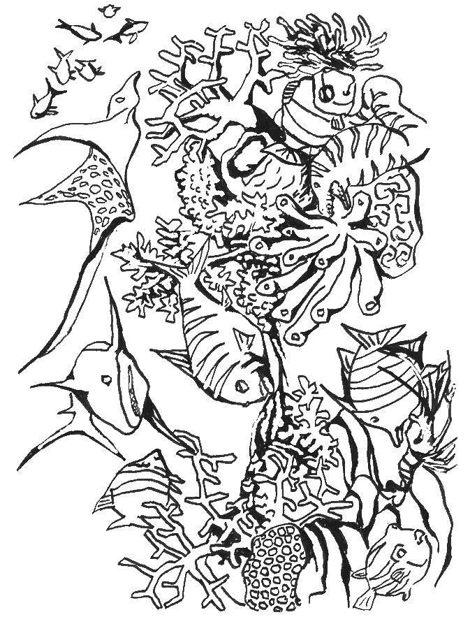 Раскраска морское Скачать мультфильмы, черепашки ниндзя.  Распечатать ,черепашки ниндзя,