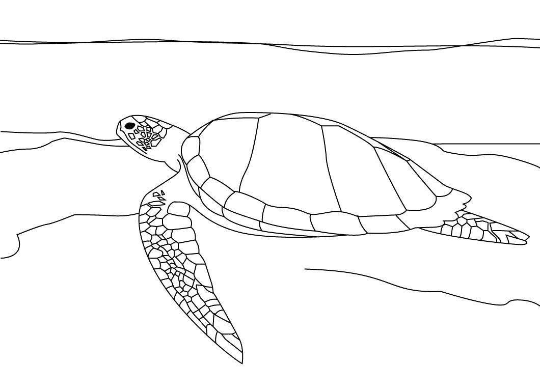 Раскраска морское Скачать Рептилия, черепаха.  Распечатать ,Морская черепаха,