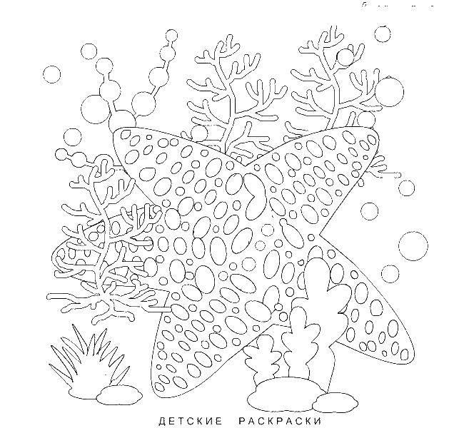 Раскраски морская, Страница:14.