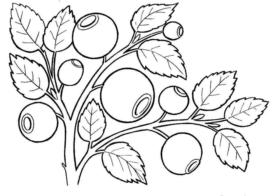 Раскраска Ягоды лесные Скачать ягода.  Распечатать ,ягоды,