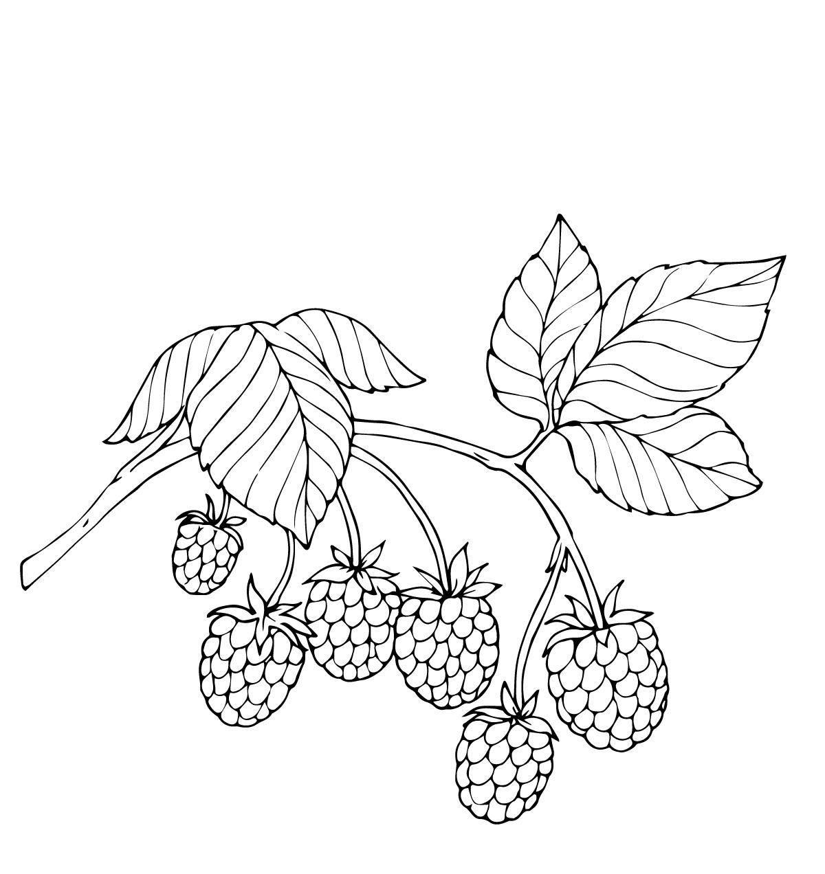 Раскраска ягоды Скачать алладин, принцесса Шахерезада, ковер.  Распечатать ,Персонажи из сказок,