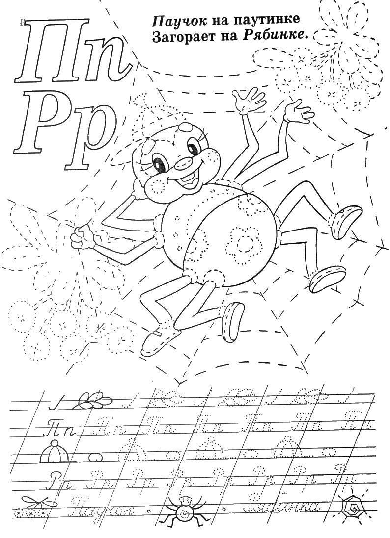 Раскраска Паук на паутине. Скачать пропись.  Распечатать ,Прописи,