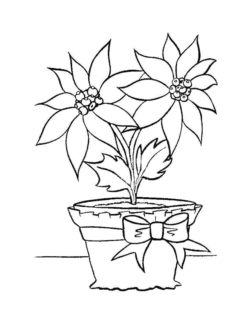 Раскраска Цветы в горшке Скачать цветы.  Распечатать ,растения,