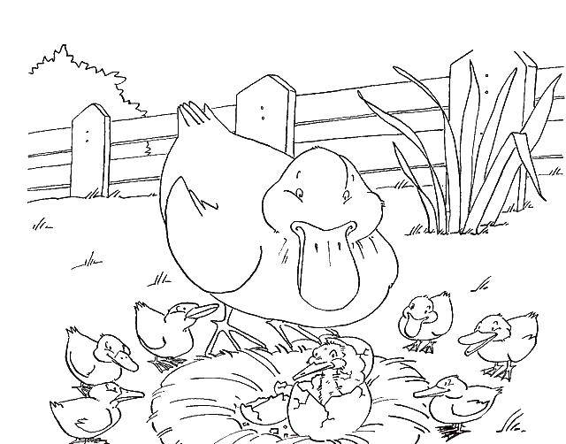 Раскраски утка, Страница:2.