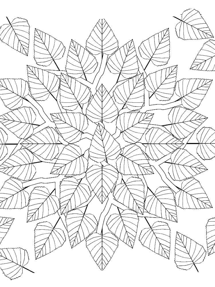 Раскраска Контуры листьев Скачать пони, Рарити, эпл.  Распечатать ,мой маленький пони,