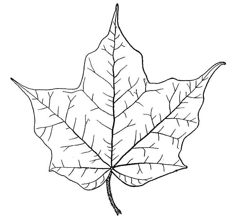 Раскраска листья Скачать Спорт, гимнастика.  Распечатать ,гимнастика,