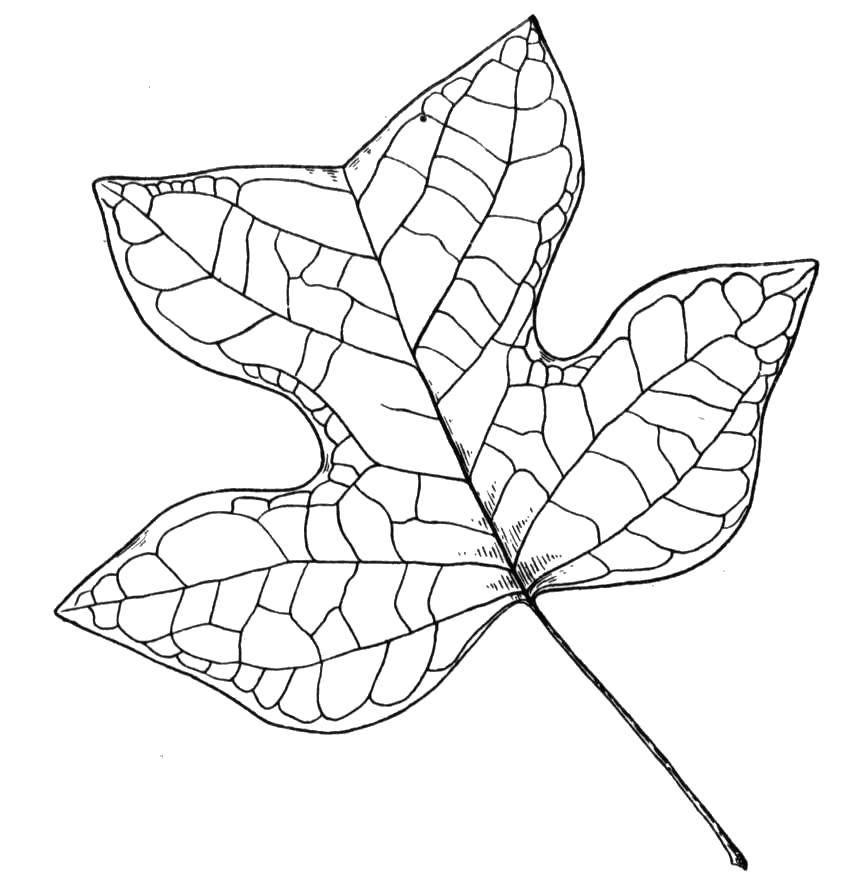 Раскраска листья Скачать Олимпиада.  Распечатать ,игры,