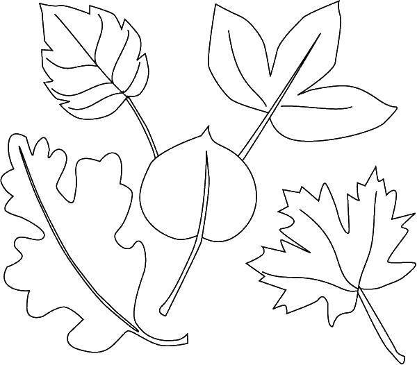 Раскраска Контуры листьев Скачать ,листья,.  Распечатать