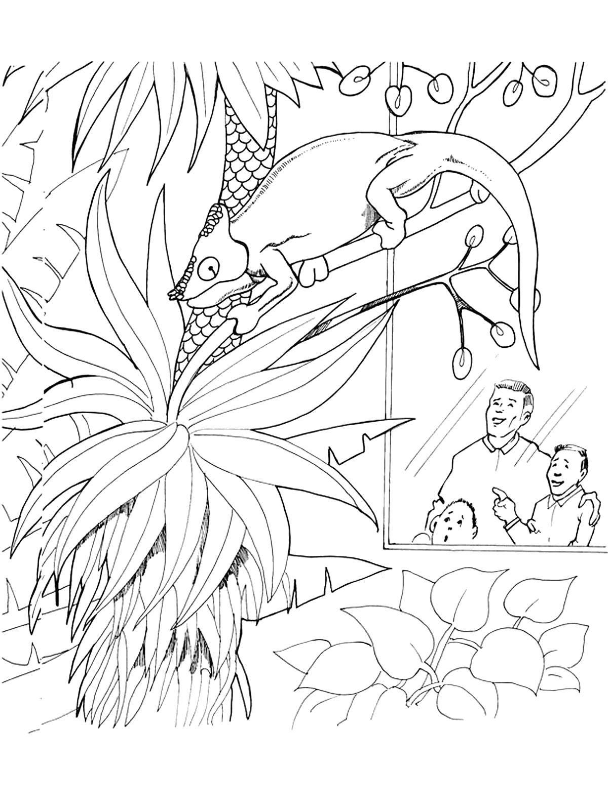 Раскраска Хамелеон на веточке в зоопарке Скачать Животные, хамелеон, рептилия.  Распечатать ,Животные,