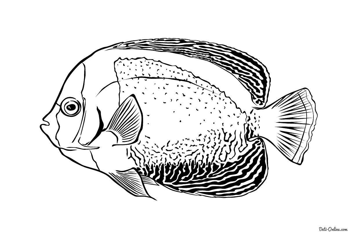 Раскраска Красивая рыба Скачать Рыбы, вода.  Распечатать ,рыбы,