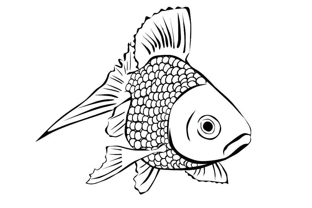 Раскраска рыбы Скачать Тетрадь.  Распечатать ,Лист тетради в линейку,