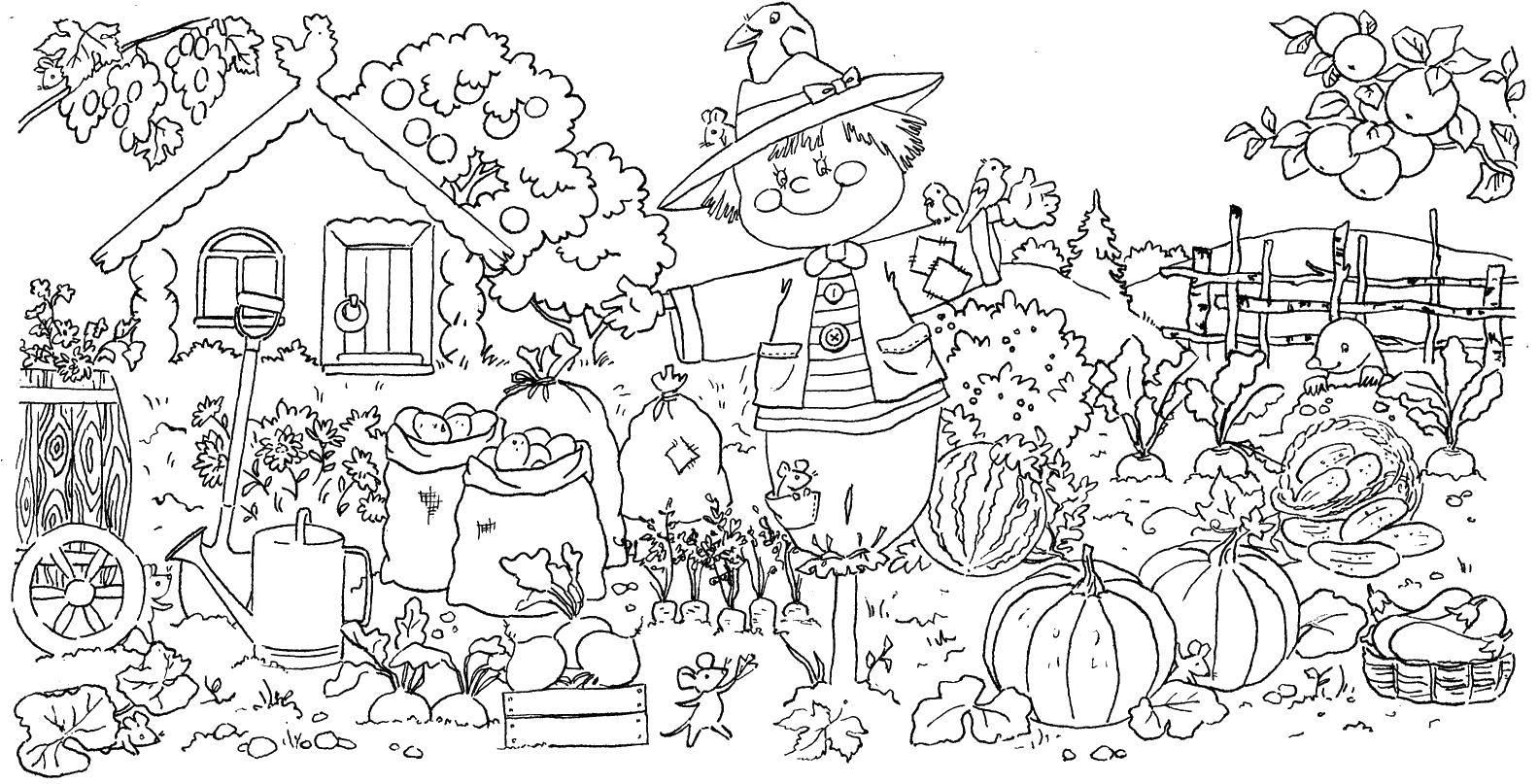 Раскраска Пугало в осеннем огороде Скачать ,Природа, огород, пугало, овощи, дом,.  Распечатать
