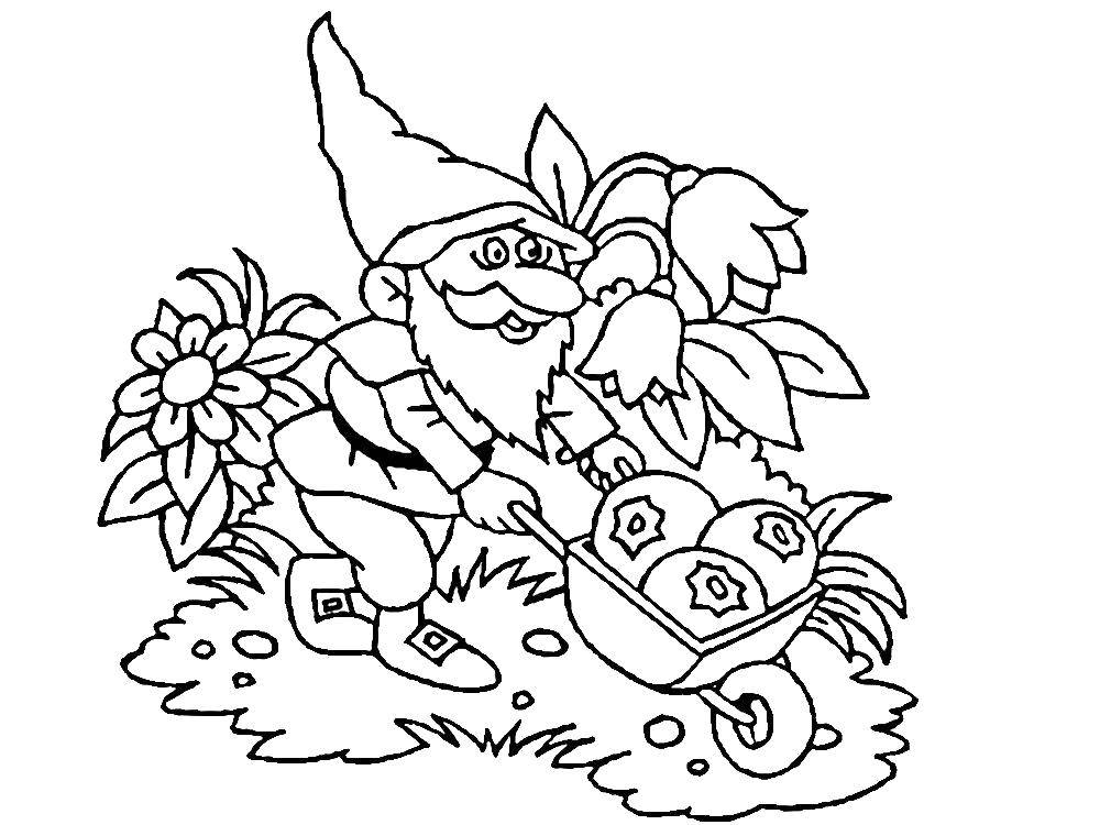 Раскраска Гномик везёт урожак Скачать Гном, урожай.  Распечатать ,гномы,