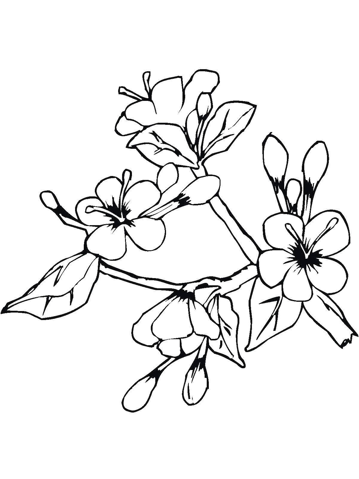 Раскраска весна Скачать мортал комбат.  Распечатать ,мортал комбат,