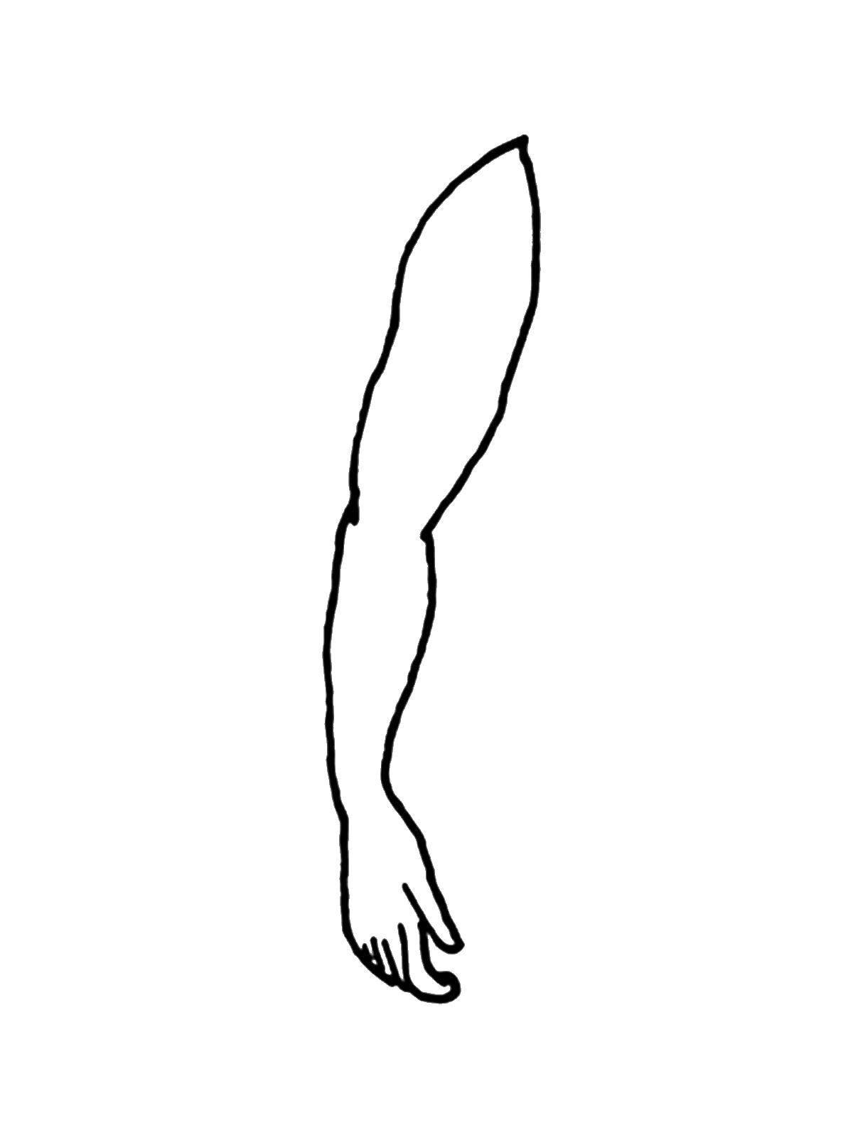 Раскраска Рука Скачать Рука.  Распечатать ,Строение тела,
