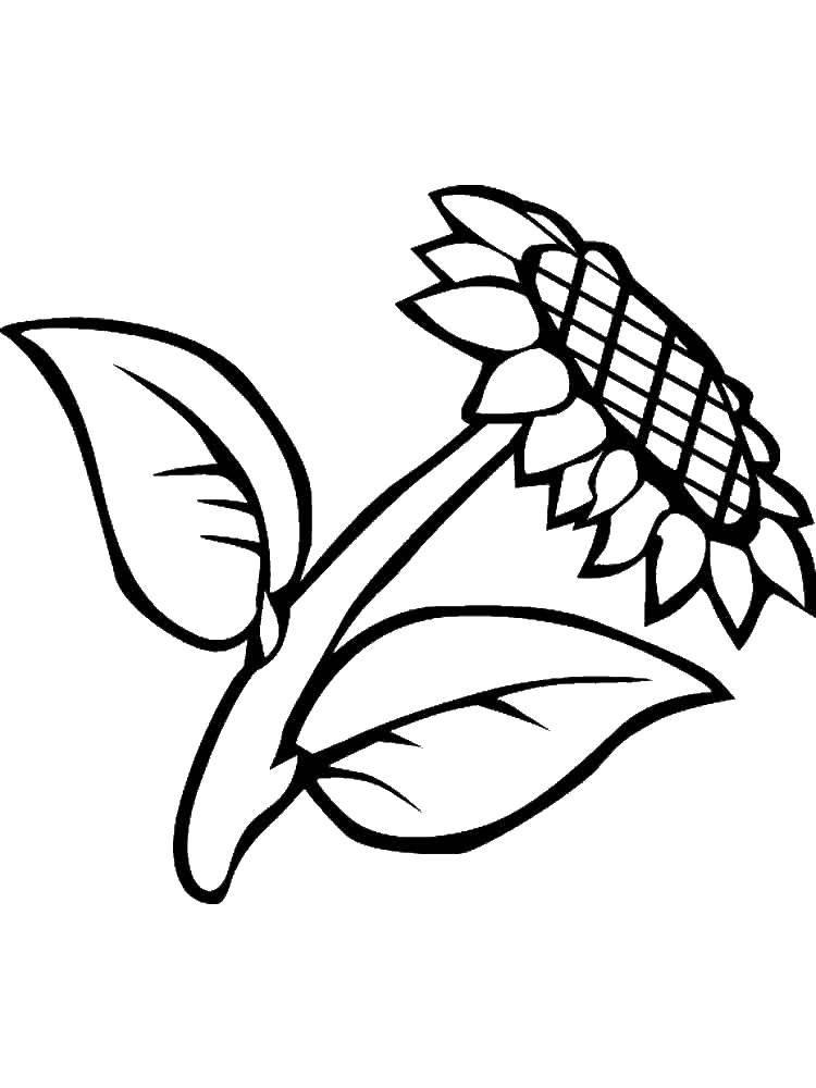 Раскраска Растение Скачать ,барби, девочка. кукла,.  Распечатать