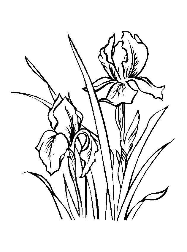 Раскраска весна Скачать Персонаж из мультфильма, Winx.  Распечатать ,Винкс,