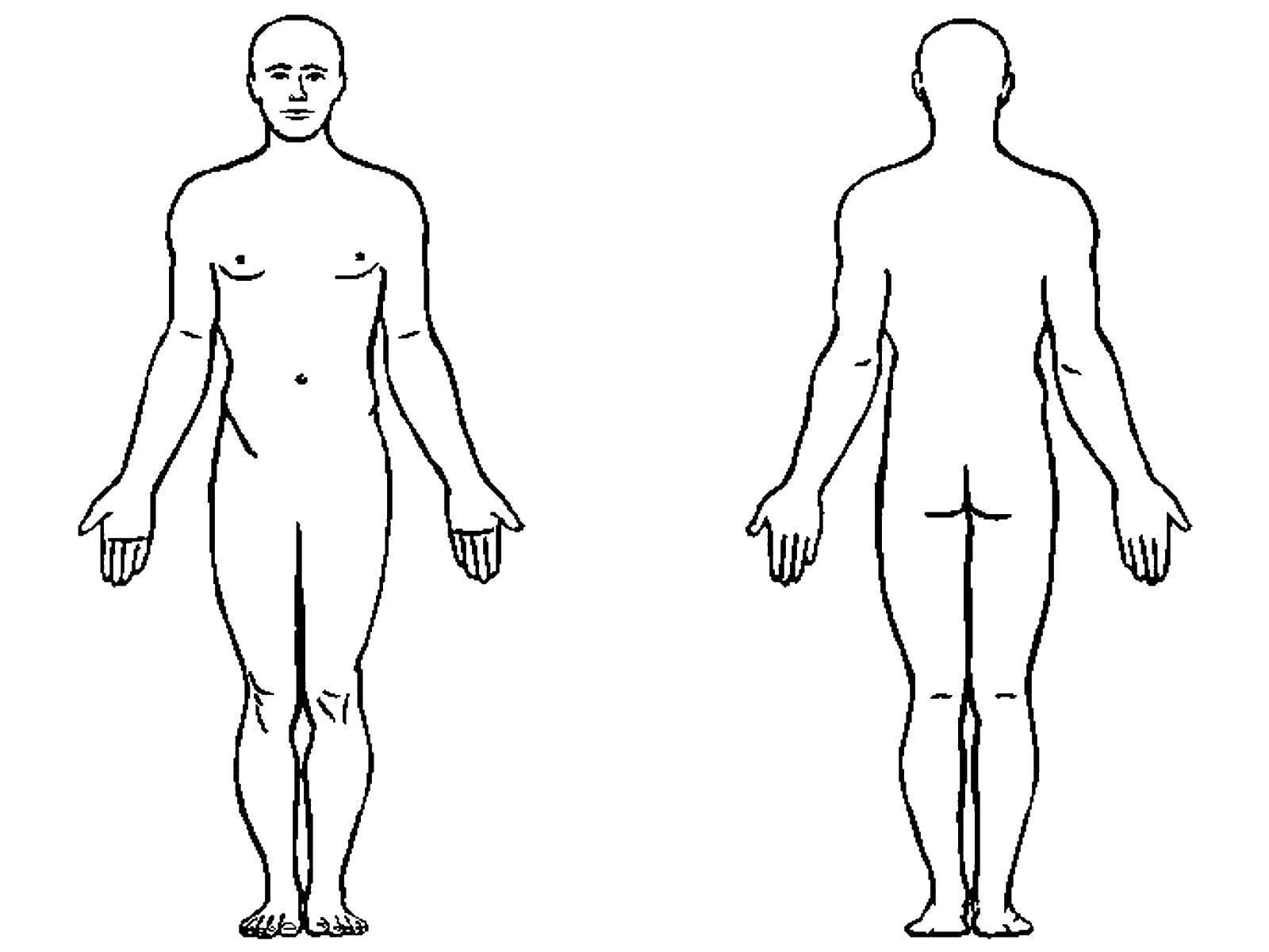 Раскраска Человеческое тело Скачать Тело, человек.  Распечатать ,Строение тела,