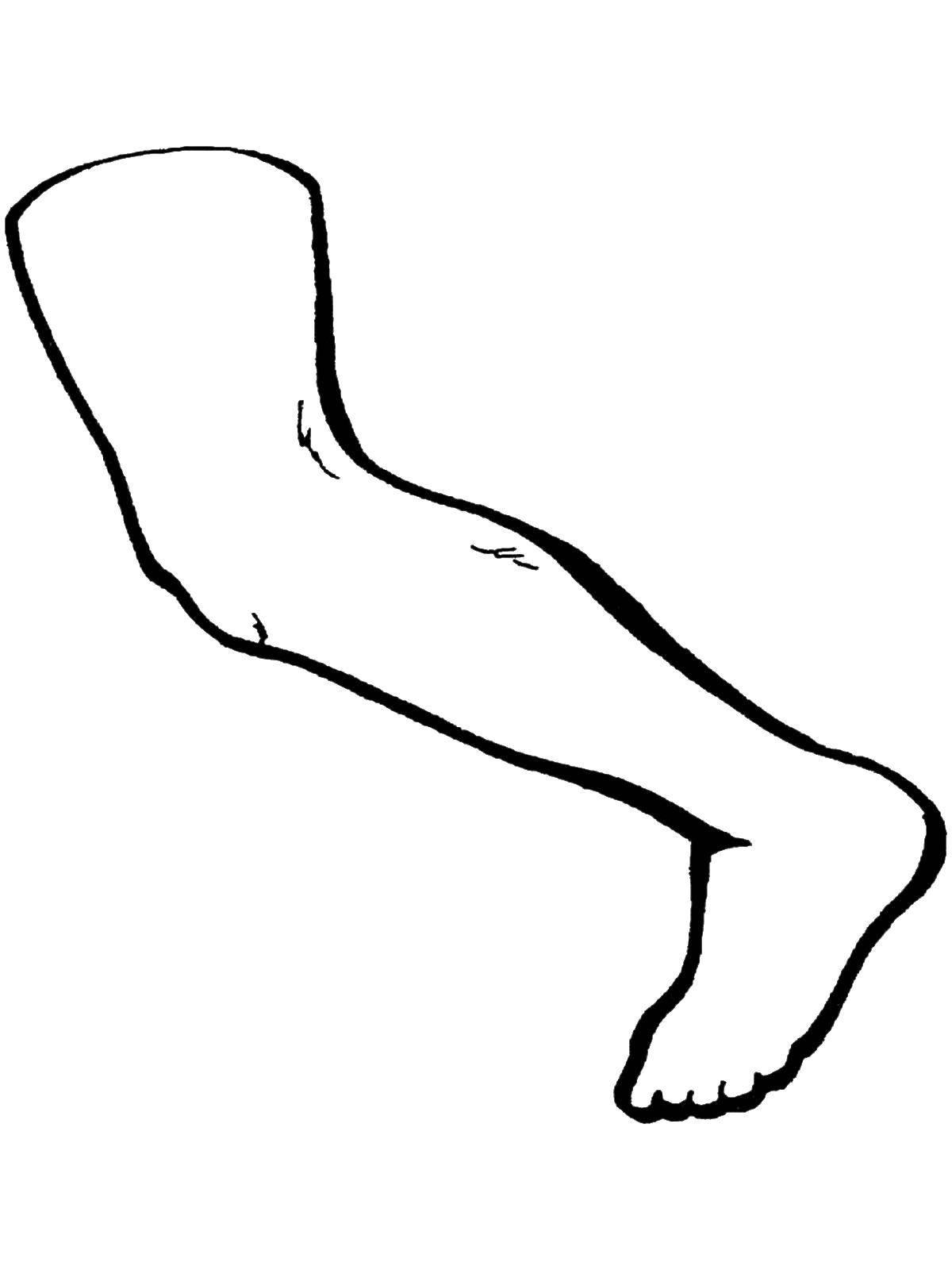 Раскраска Нога Скачать Нога.  Распечатать ,Строение тела,