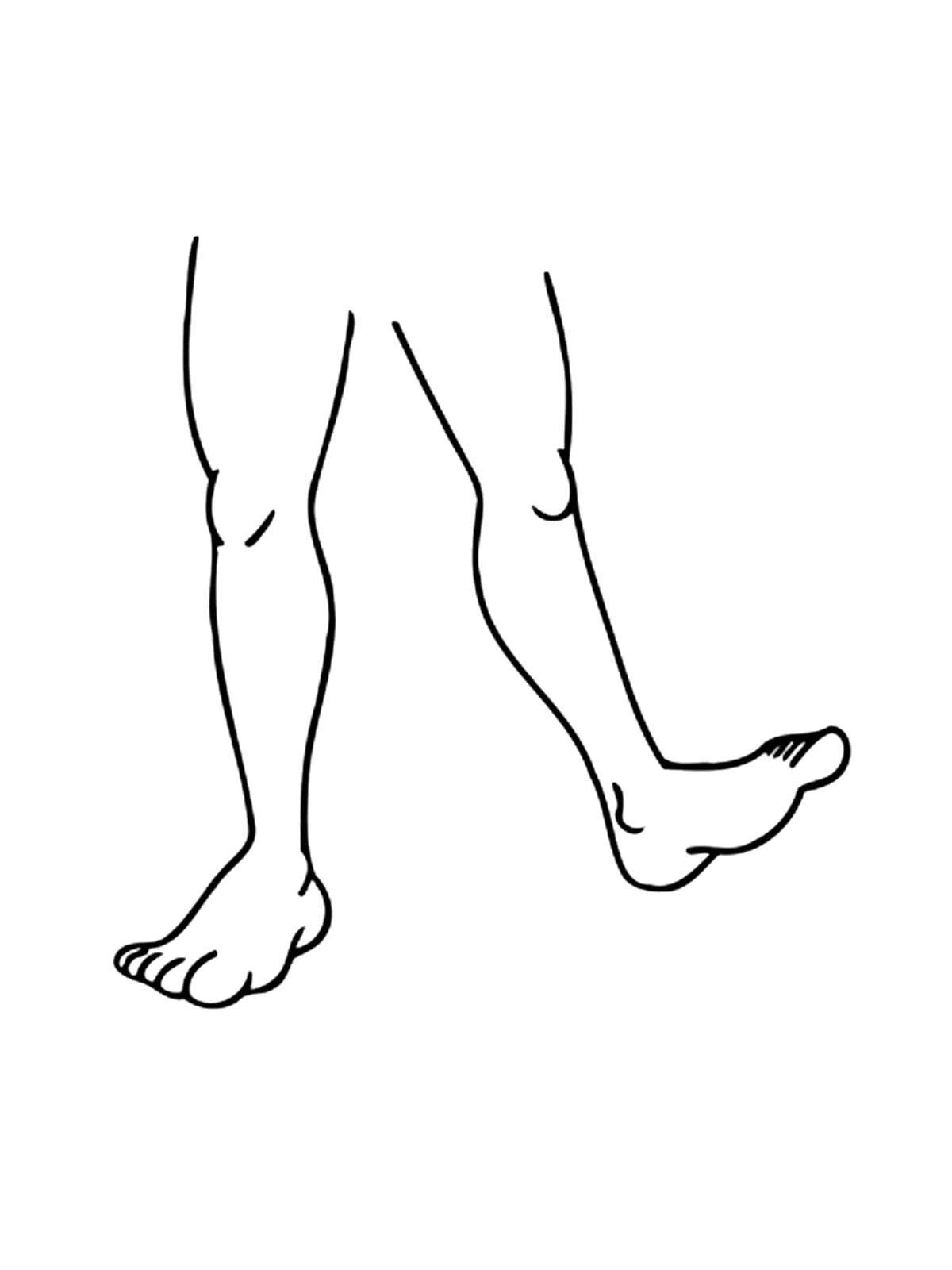 Раскраска Ноги Скачать Нога.  Распечатать ,Строение тела,