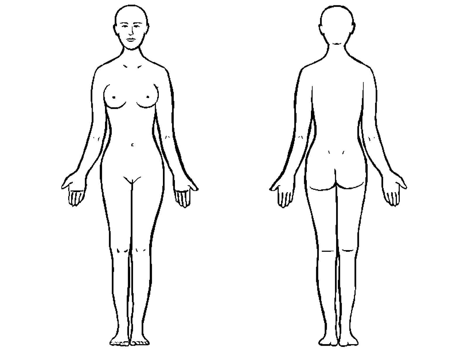 Раскраска Строение тела Скачать Тело, человек.  Распечатать ,Строение тела,