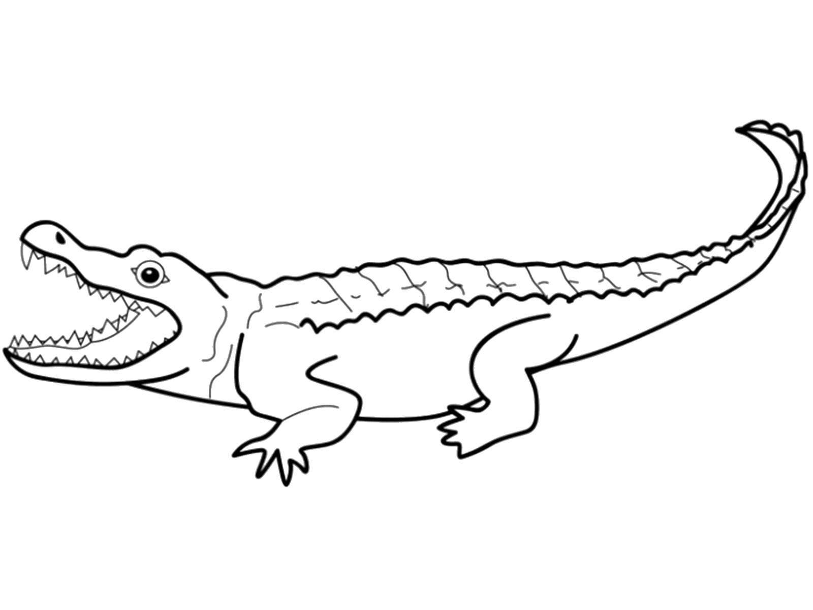 Раскраска Крокодил Скачать ,Рептилия, крокодил,.  Распечатать