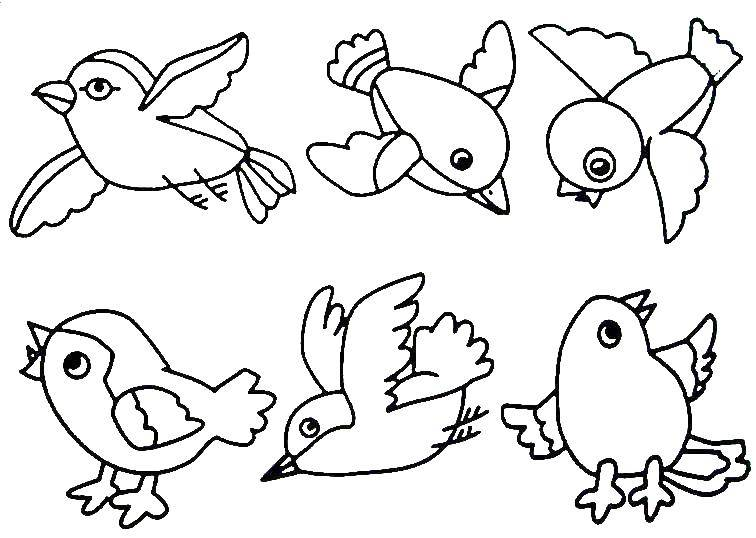 Раскраска Птички Скачать Птицы.  Распечатать ,раскраски,