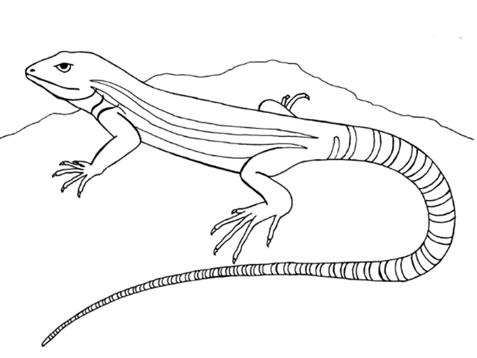 Раскраска Ящерица Скачать ,Рептилия, ящерица,.  Распечатать