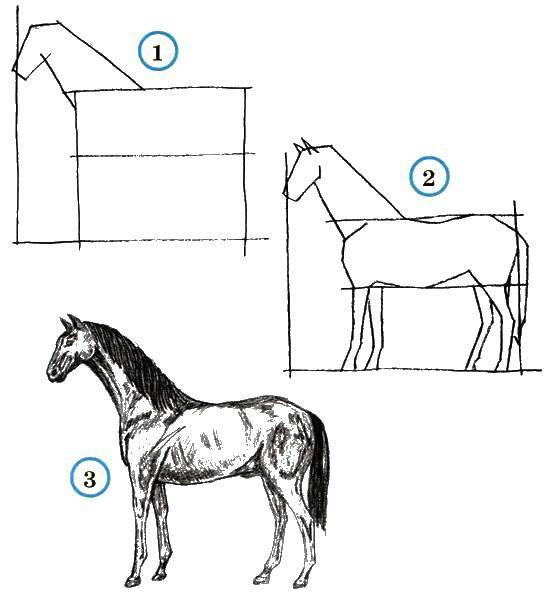 Раскраска Поэтапно рисуем коня Скачать Животные, конь.  Распечатать ,как нарисовать поэтапно животных,