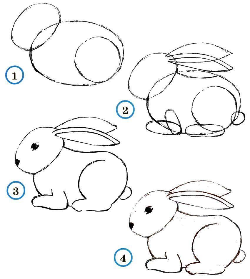 Раскраска Учимся рисовать зайчика Скачать Животные, зайчик.  Распечатать ,как нарисовать поэтапно животных,