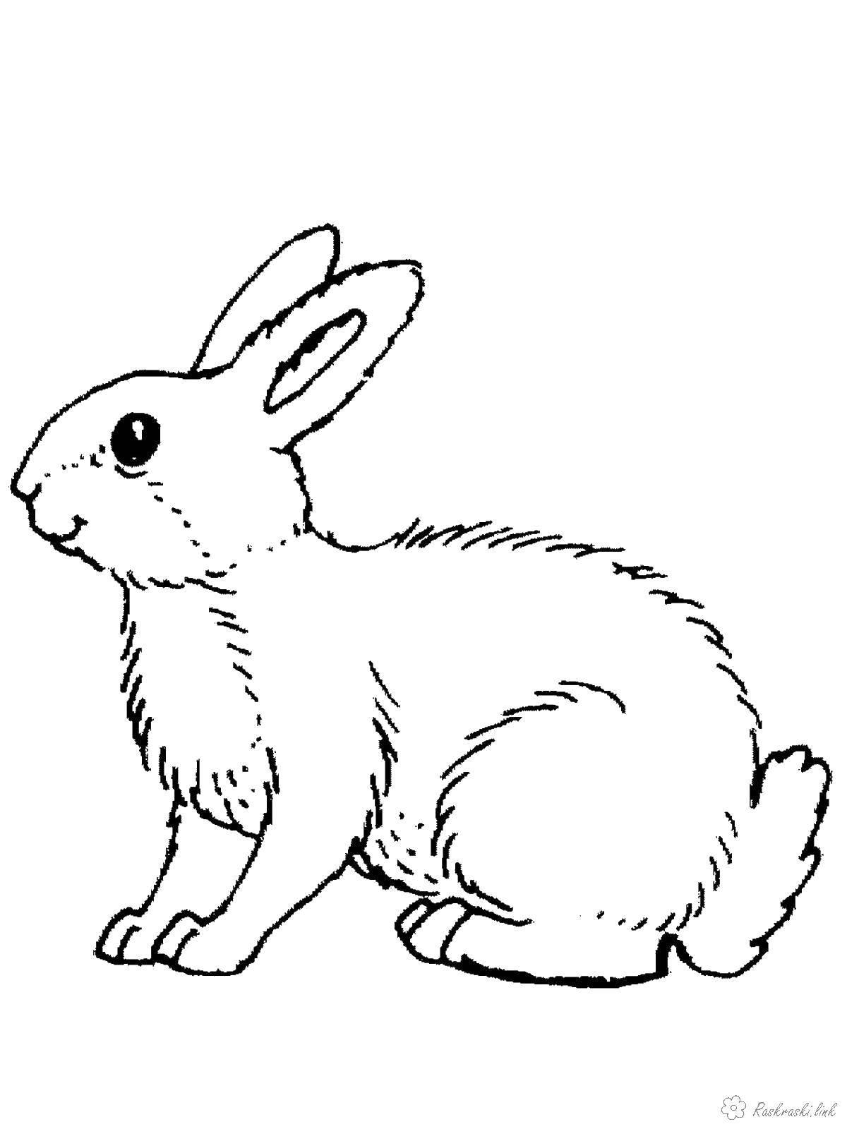 Раскраска дикие животные Скачать ,кролик,.  Распечатать