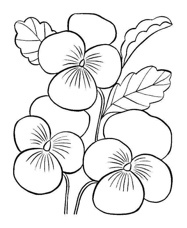 Раскраска Поэтапно рисуем цветы Скачать Цветы.  Распечатать ,как нарисовать поэтапно цветы,