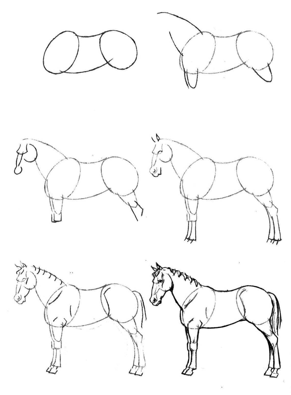 Раскраска Поэтапно рисуем лошадь Скачать Животные, лошадь.  Распечатать ,как нарисовать поэтапно карандашом,