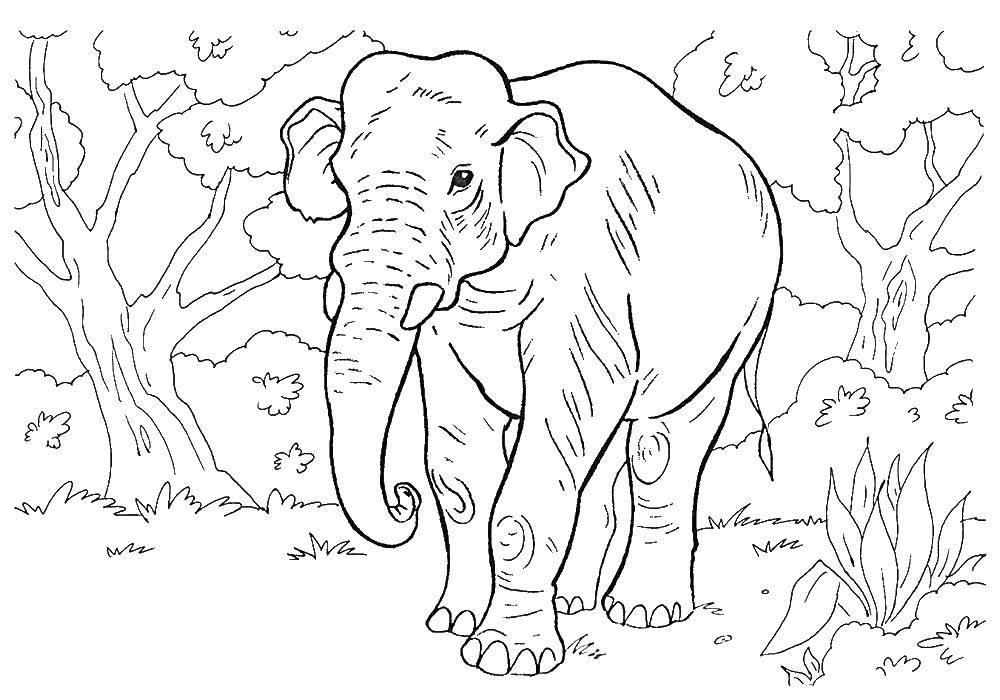 Раскраска дикие животные Скачать Сказки.  Распечатать ,Сказки,