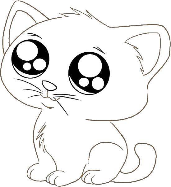 Раскраска Маленький котёнок Скачать Животные, котёнок.  Распечатать ,котики,