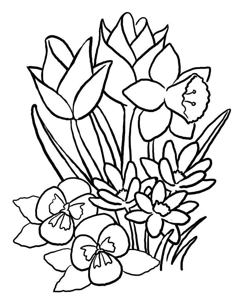 Раскраска цветы Скачать игры, майнкрафт, персонажи.  Распечатать ,майнкрафт,
