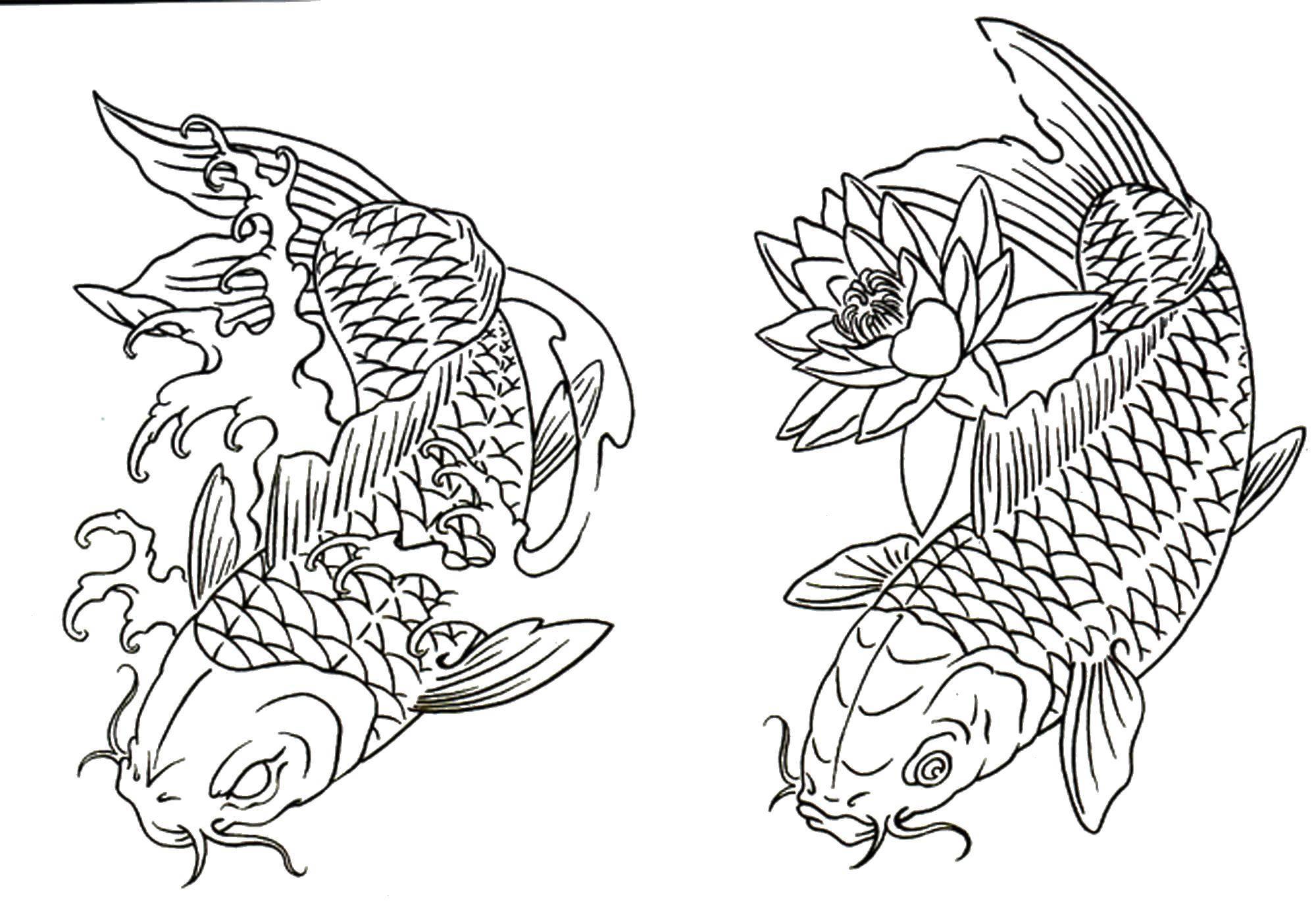 раскраски раскраска сом рыбы скачать распечатать раскраски