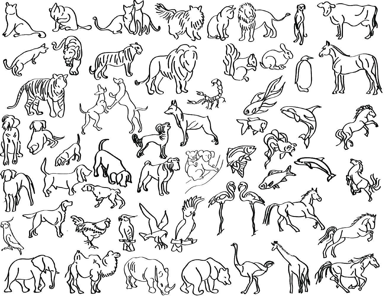 Раскраска Все животные вместе Скачать животные.  Распечатать ,Контуры животных,