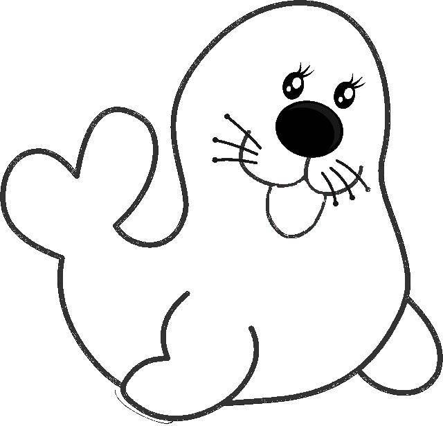 раскраски раскраска тюлень контуры животных сайт раскрасок