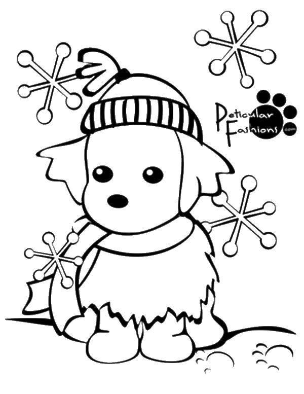 Раскраска Собачка в шапке Скачать собака, шапка, снег.  Распечатать ,раскраски зима,