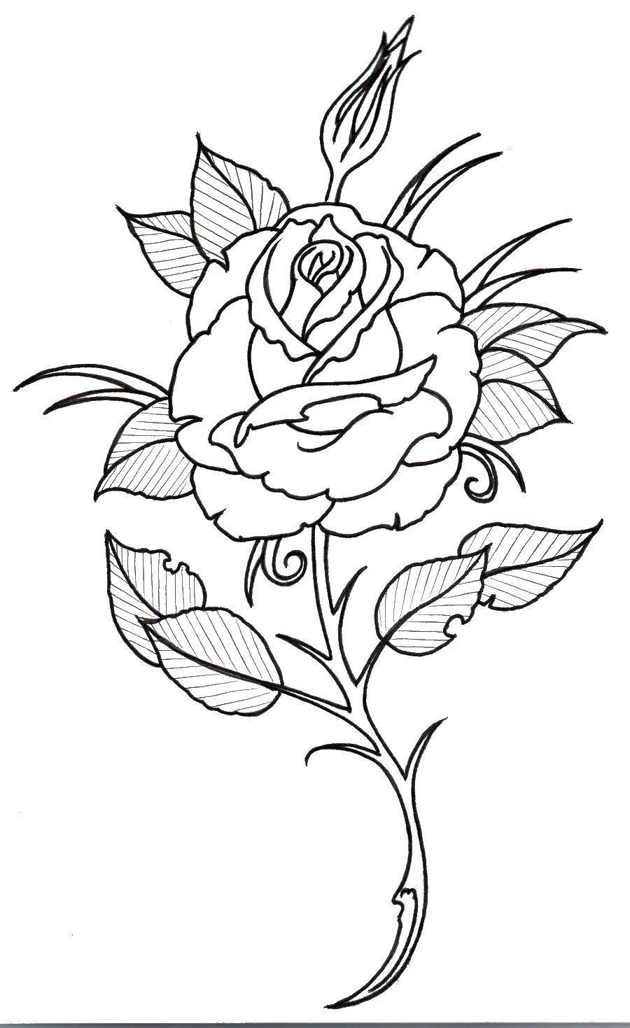 Раскраска Контуры розы Скачать платья, одежда.  Распечатать ,Платья,