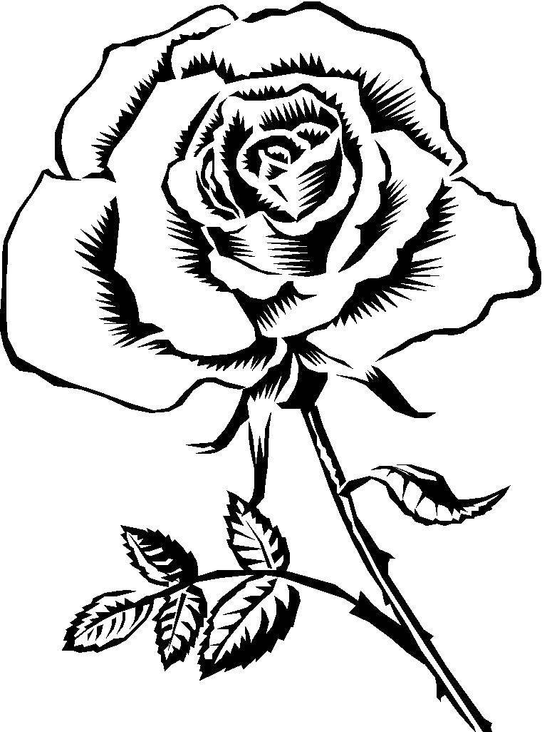 Раскраска Роза с шипами Скачать роза, цветы.  Распечатать ,Контуры розы,