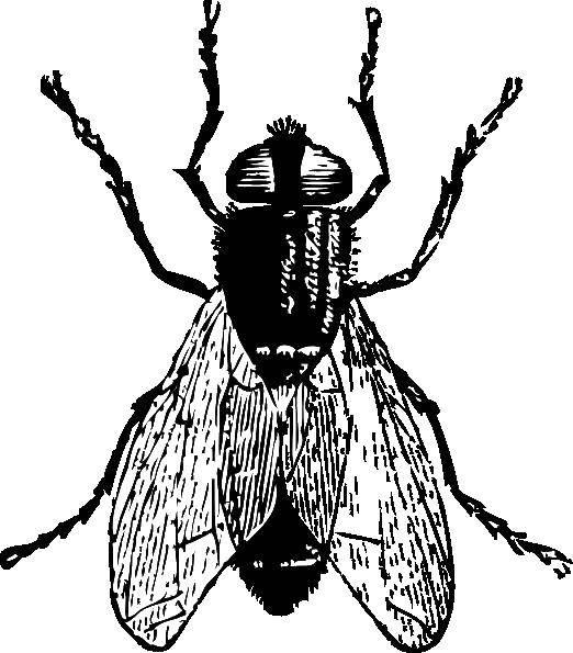 раскраски раскраска муха контуры насекомые раскраски